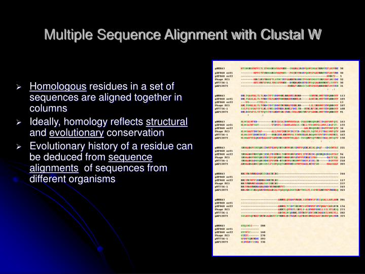Multiple Sequence Alignment with Clustal W