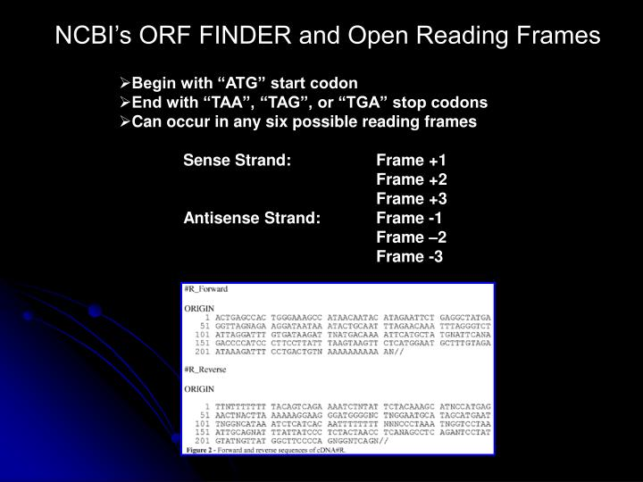NCBI's ORF FINDER and Open Reading Frames