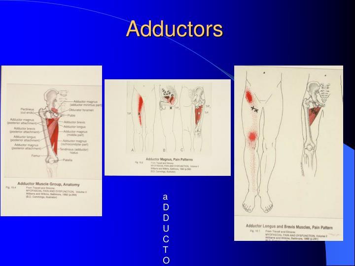 Adductors