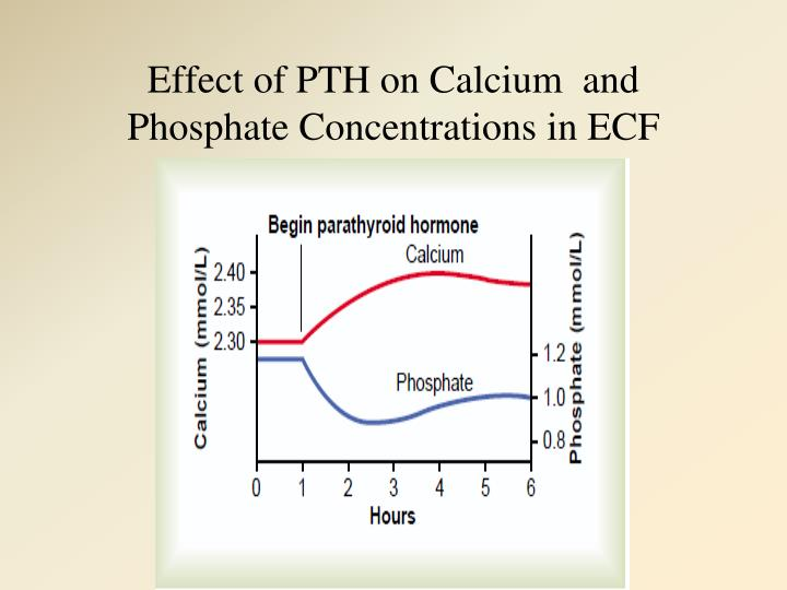Effect of PTH on Calcium  and Phosphate Concentrations in ECF