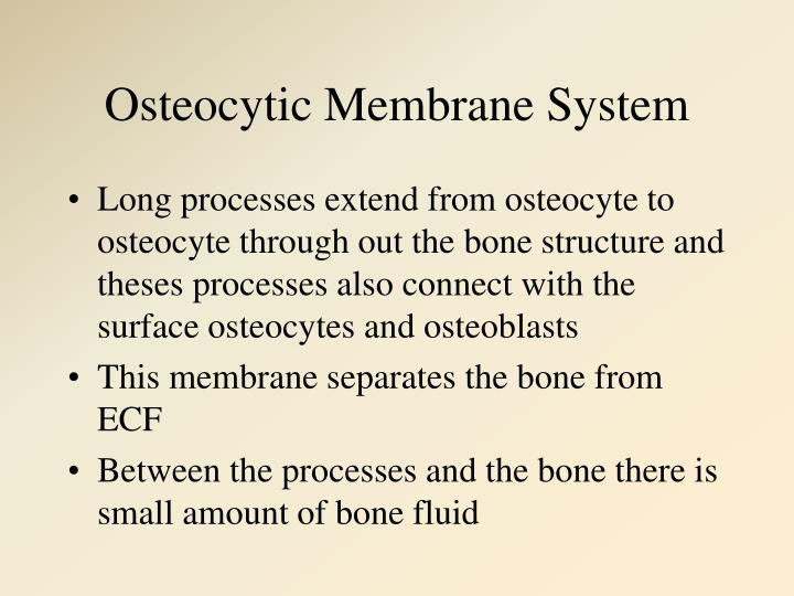 Osteocytic Membrane System