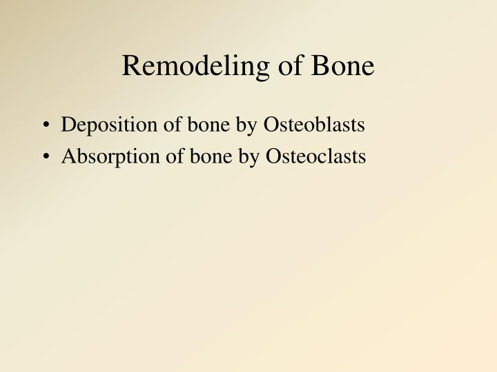 Remodeling of Bone