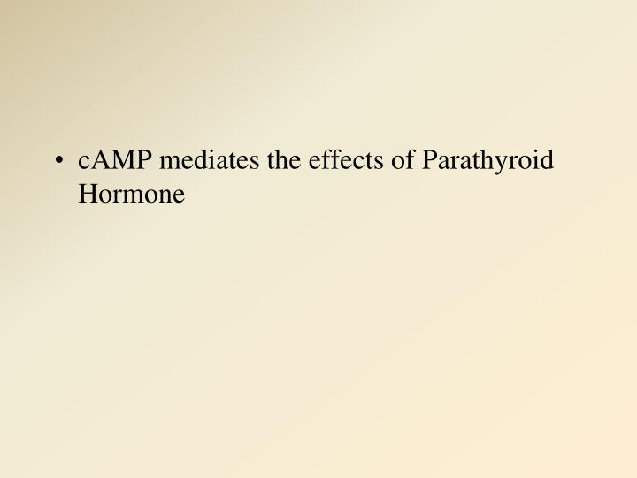 cAMP mediates the effects of Parathyroid Hormone