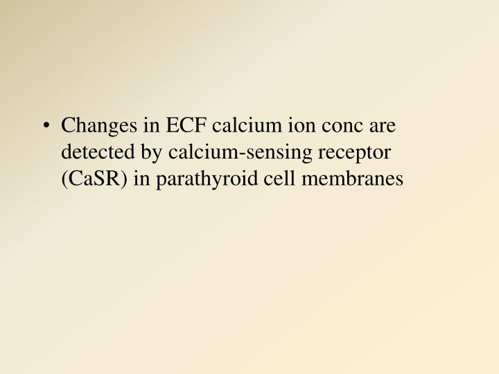 Changes in ECF calcium ion conc are detected by calcium-sensing receptor (CaSR) in parathyroid cell membranes