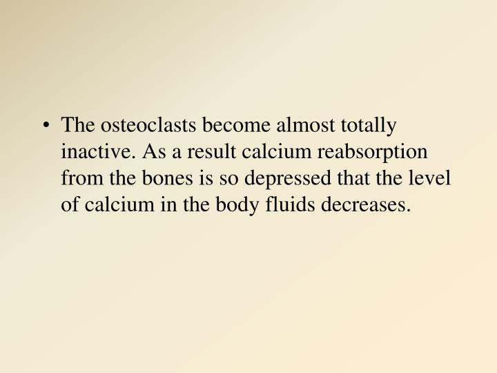 The osteoclasts become almost totally inactive. As a result calcium reabsorption from the bones is so depressed that the level of calcium in the body fluids decreases.