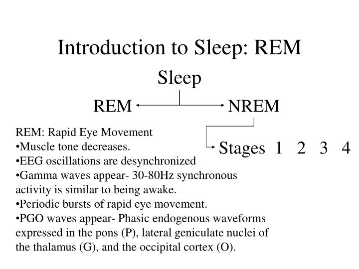 Introduction to Sleep: REM
