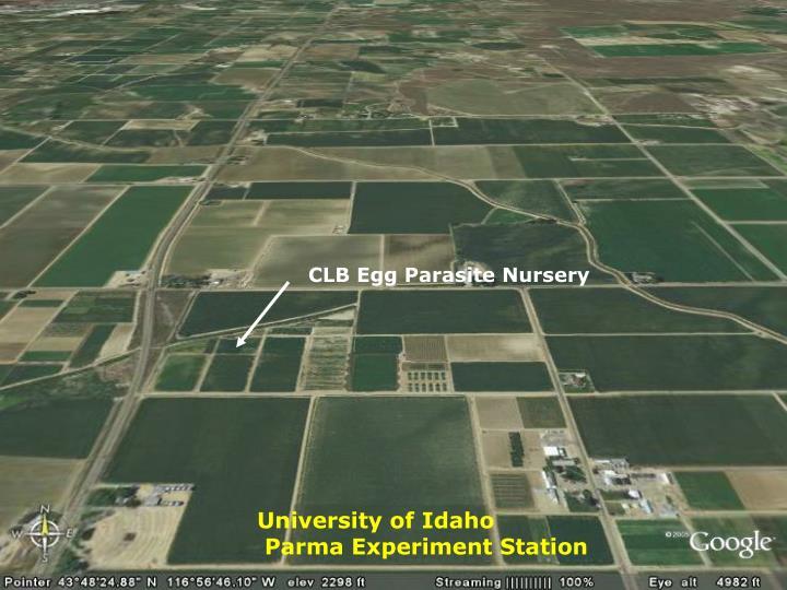 CLB Egg Parasite Nursery