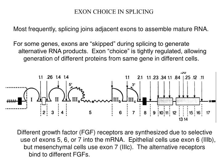 EXON CHOICE IN SPLICING