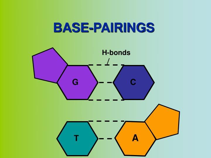 H-bonds
