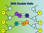 dna double helix1