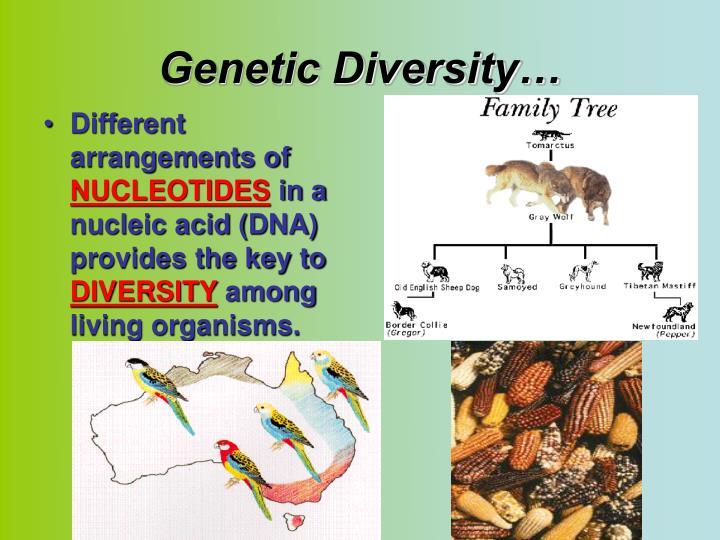 Genetic Diversity…
