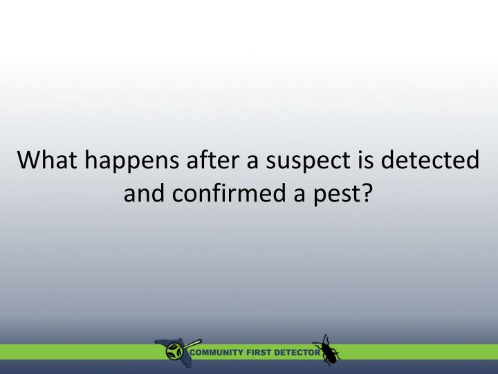 What happens after a suspect is detected and confirmed a pest?