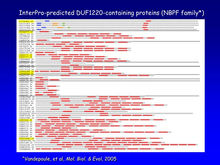 InterPro-predicted DUF1220-containing proteins (NBPF family*)