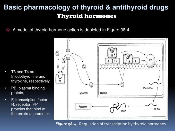 Basic pharmacology of thyroid & antithyroid drugs