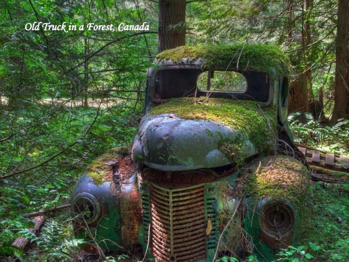 Old Truck in a Forest, Canada