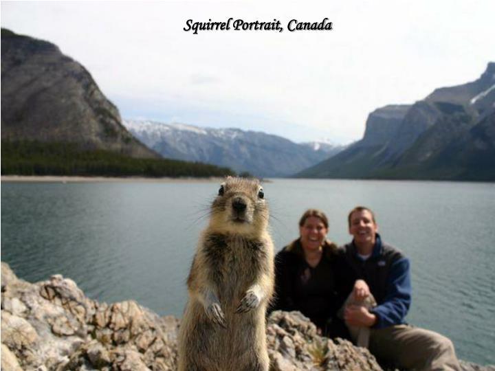 Squirrel Portrait, Canada