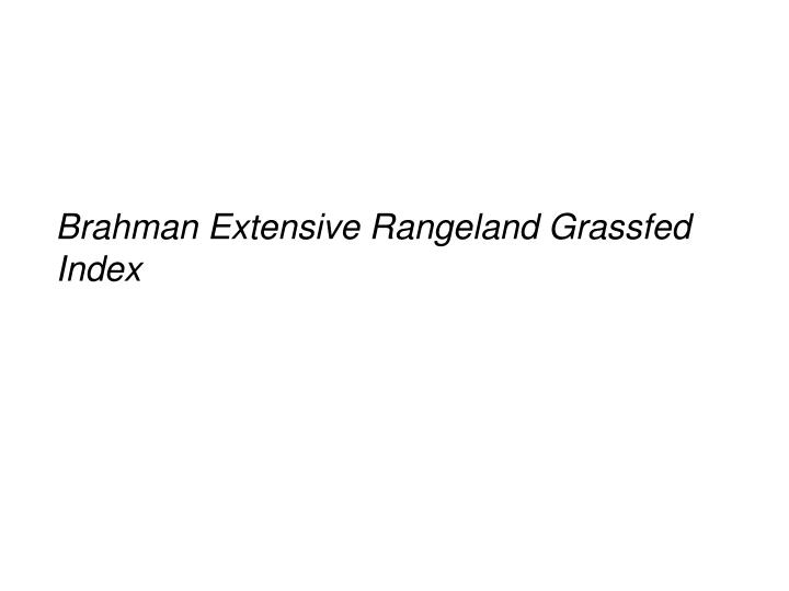Brahman Extensive Rangeland