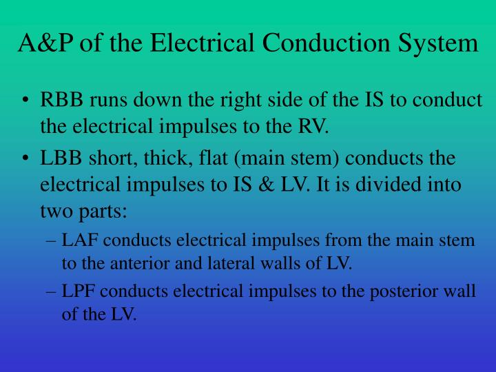 A&P of the Electrical Conduction System