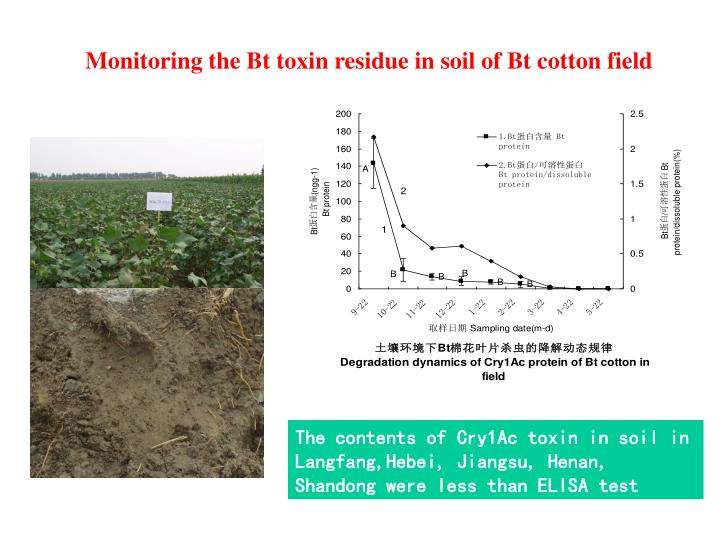 Monitoring the Bt toxin residue in soil of Bt cotton field