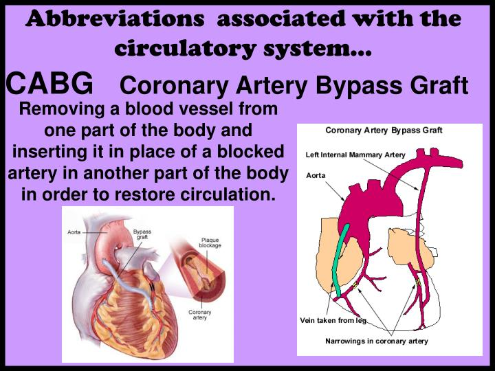 Abbreviations  associated with the circulatory system…