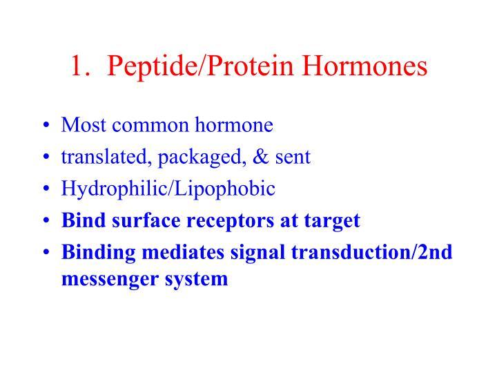 1.  Peptide/Protein Hormones