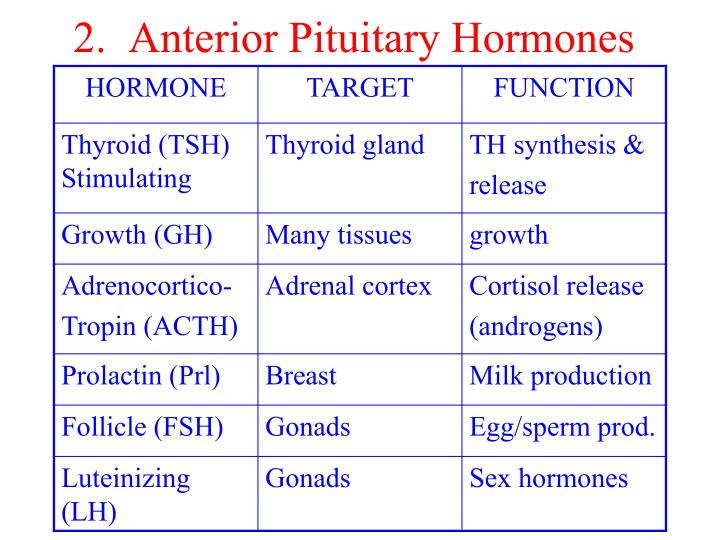 2.  Anterior Pituitary Hormones