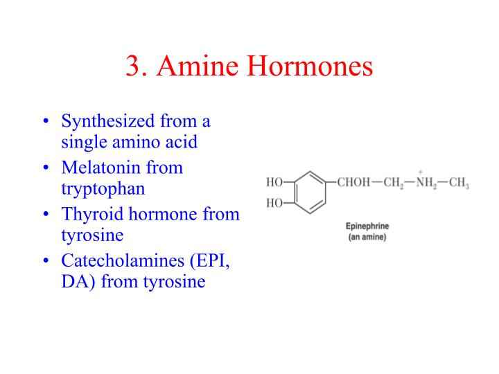 3. Amine Hormones