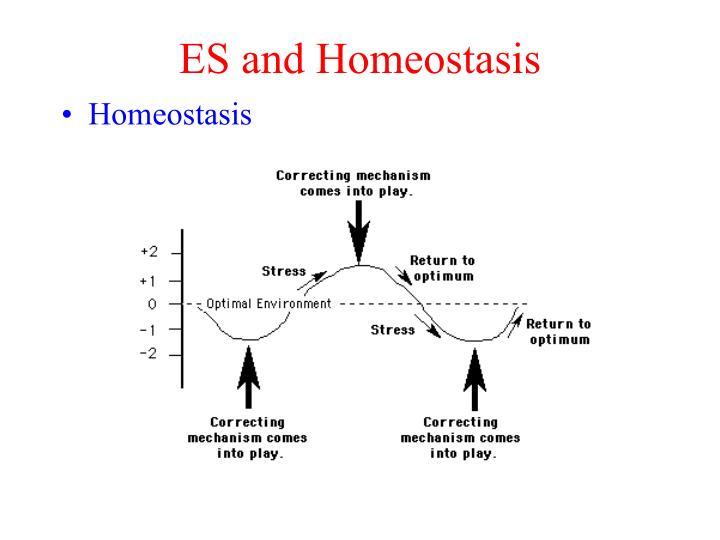 ES and Homeostasis