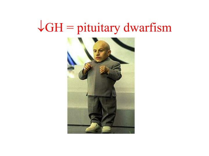GH = pituitary dwarfism