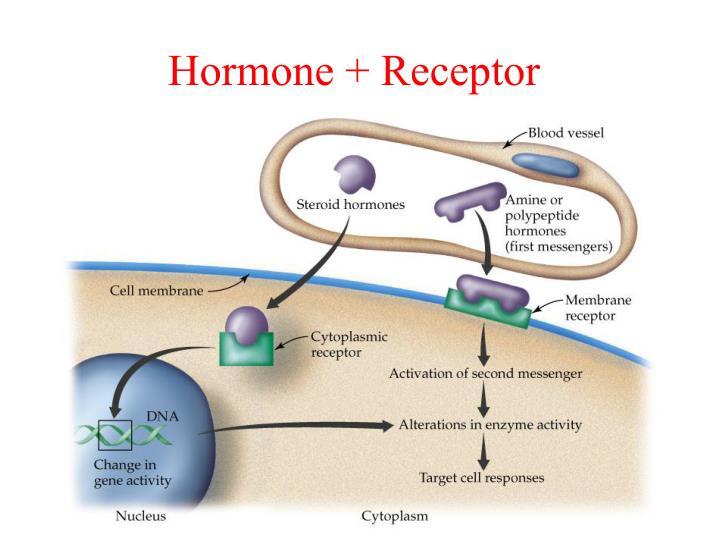 Hormone + Receptor