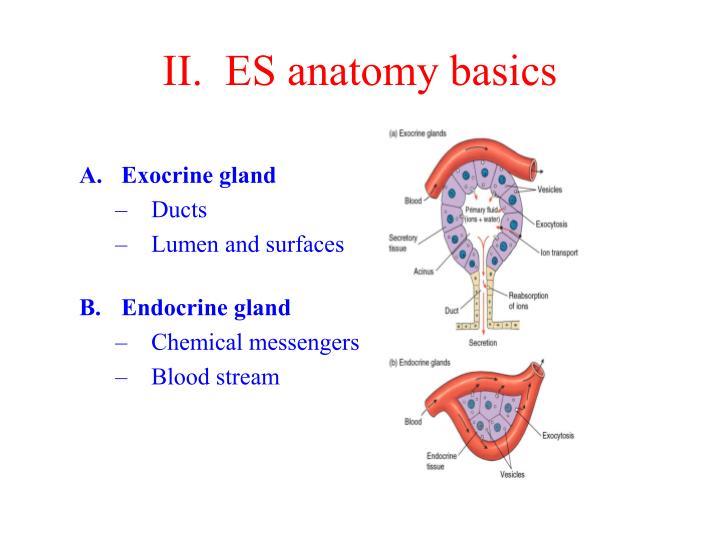 II.  ES anatomy basics
