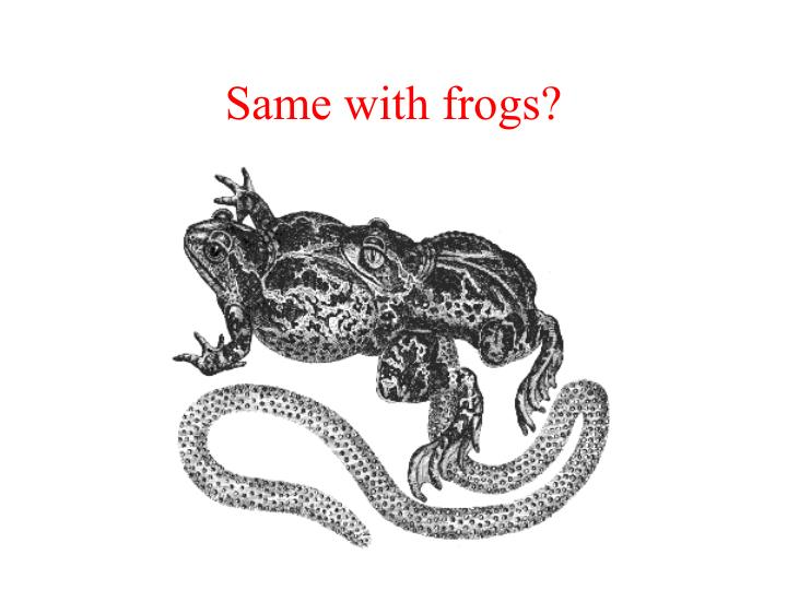 Same with frogs?