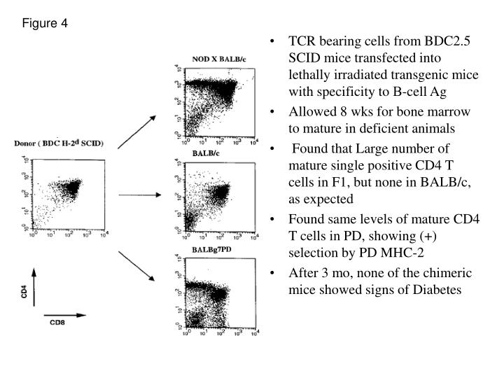TCR bearing cells from BDC2.5 SCID mice transfected into lethally irradiated transgenic mice with specificity to