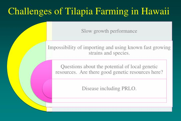 Challenges of Tilapia Farming in Hawaii