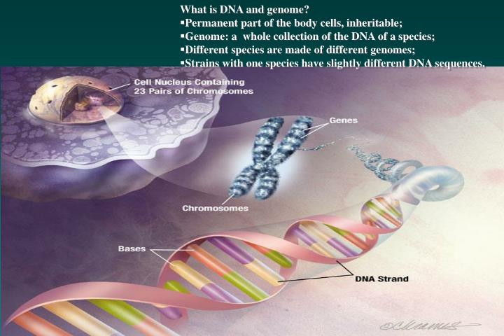 What is DNA and genome?