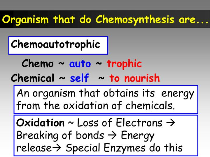Organism that do Chemosynthesis are...