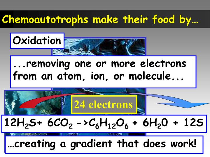 Chemoautotrophs make their food by…
