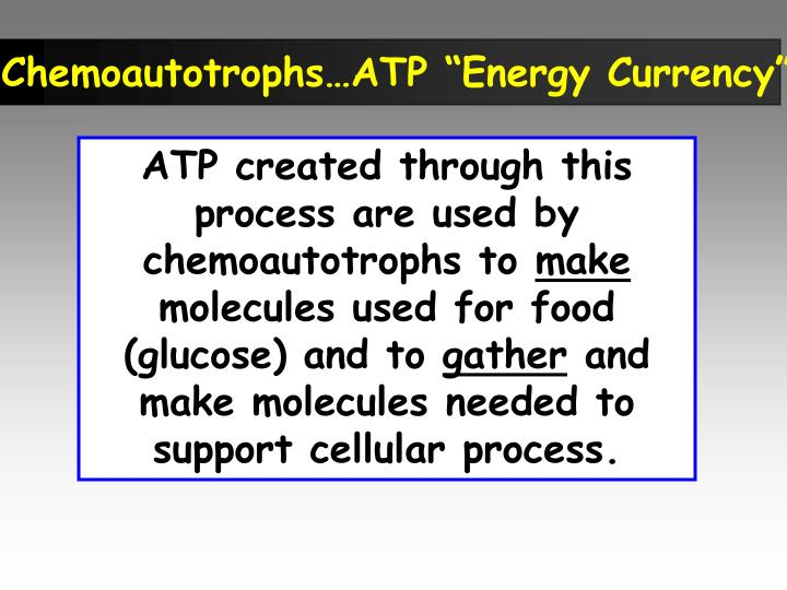 "Chemoautotrophs…ATP ""Energy Currency"""
