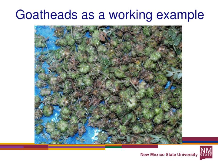 Goatheads as a working example
