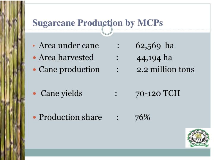 Sugarcane Production by MCPs