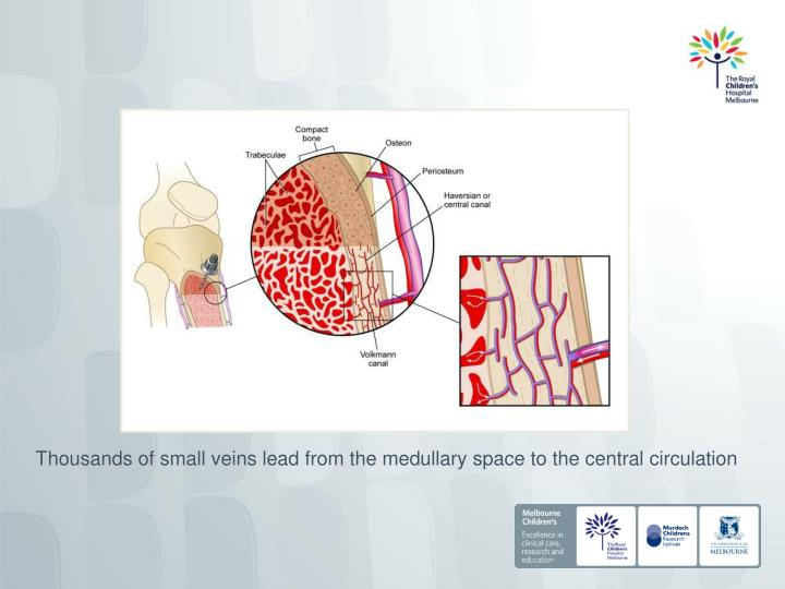Thousands of small veins lead from the medullary space to the central circulation