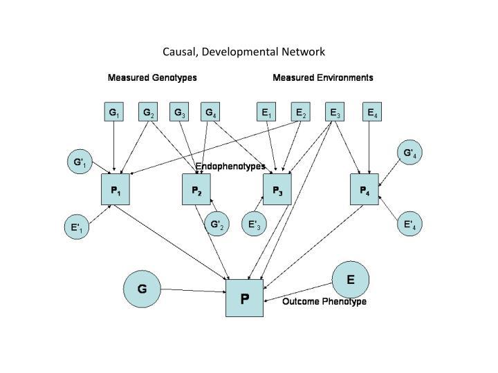 Causal, Developmental Network