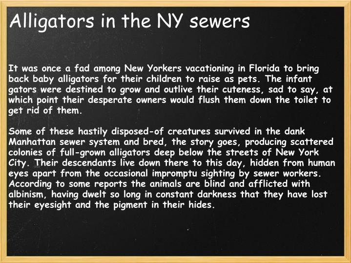 Alligators in the NY sewers