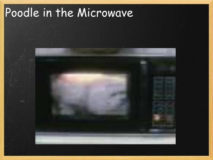 Poodle in the Microwave