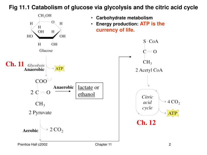 Fig 11.1 Catabolism of glucose via glycolysis and the citric acid cycle