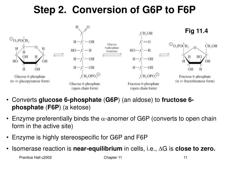 Step 2.  Conversion of G6P to F6P
