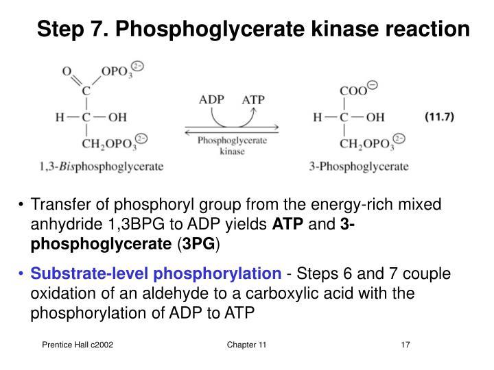 Step 7. Phosphoglycerate kinase reaction