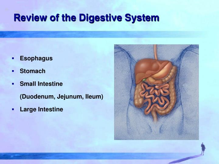 Review of the Digestive System