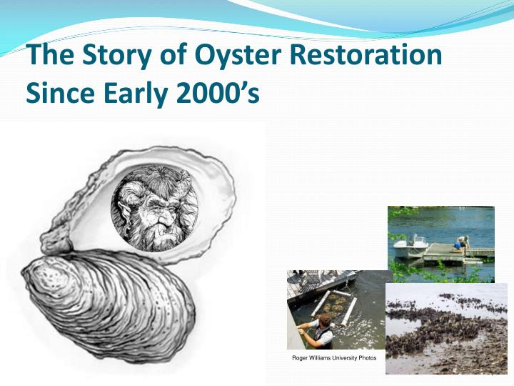 The Story of Oyster Restoration Since Early 2000's