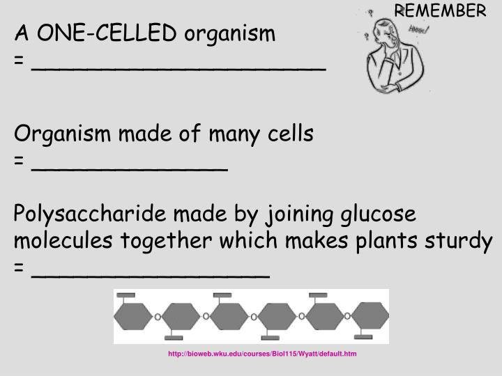 A ONE-CELLED organism